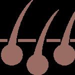 cuir chevelu
